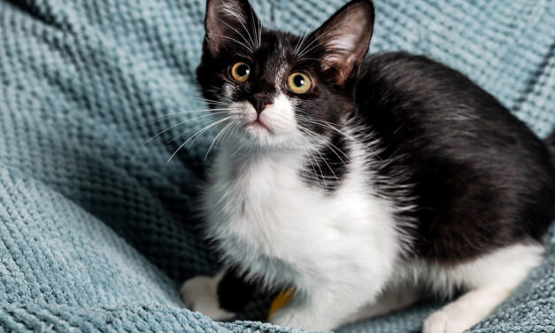 Ranking legowisk dla kotów 2021