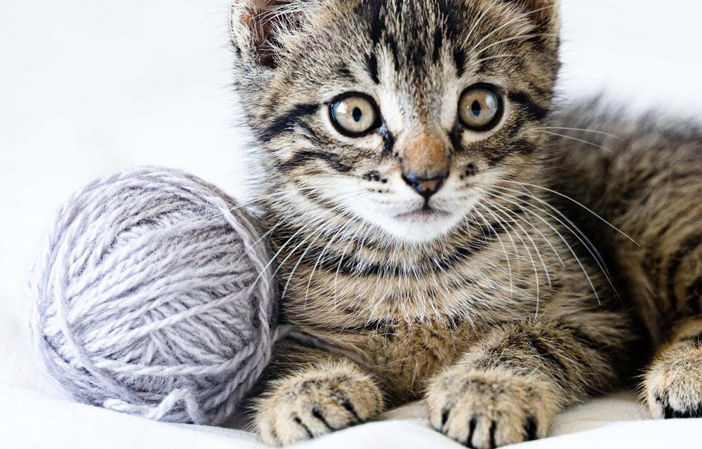 Ranking zabawek dla kotów 2021