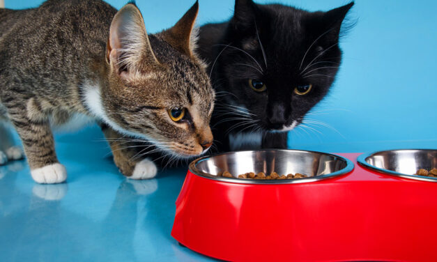 Ranking mokrych karm dla kotów 2021