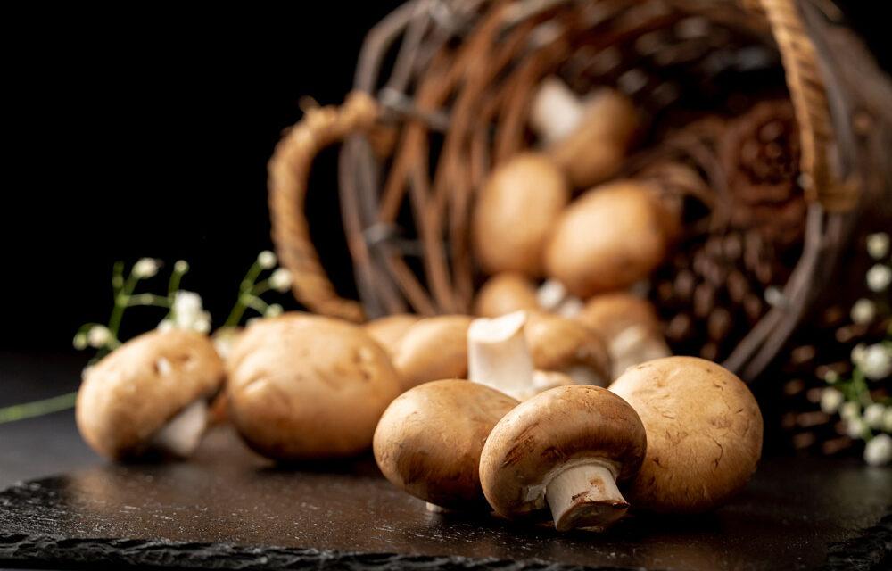Ranking suszarek do grzybów 2021