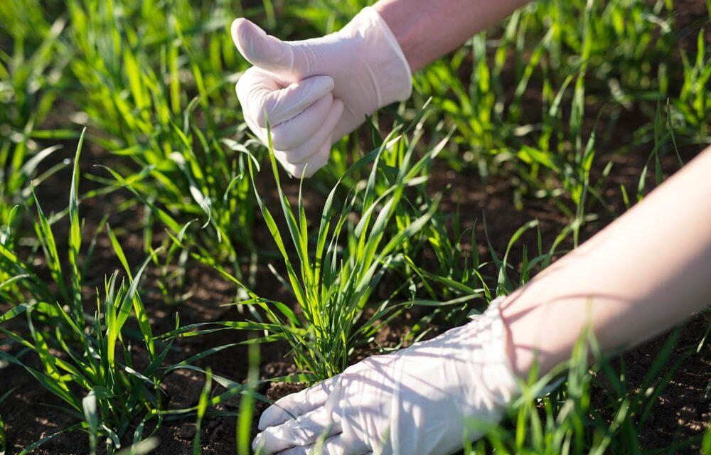 Ranking nawozów do trawy 2021