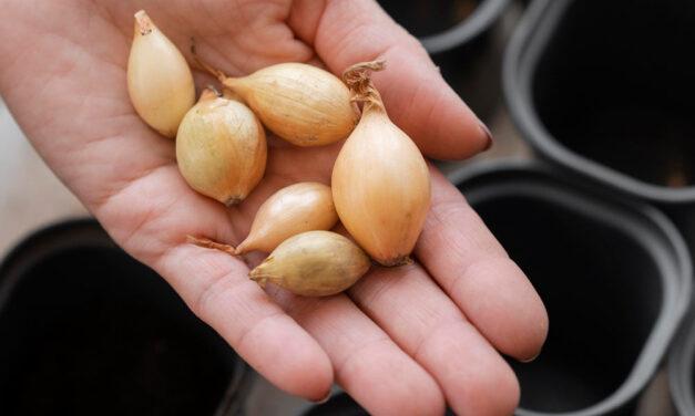 Ranking nasion warzyw 2021