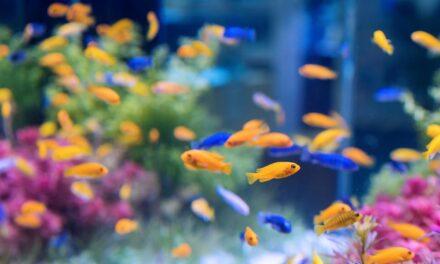 Ranking akwariów 2021