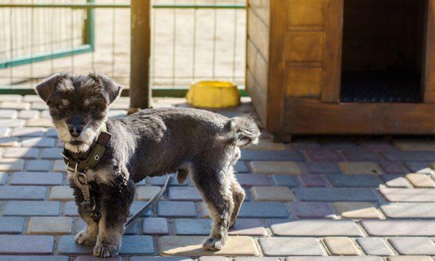 Ranking bud dla psów 2021